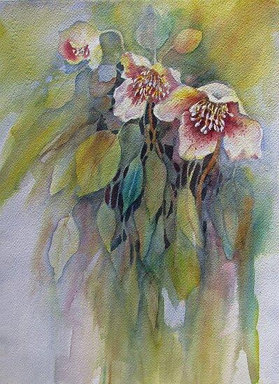 Lenten Roses by bevmorgan