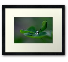 A lucky day Framed Print