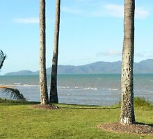 Townsville Beach with Palms by Virginia McGowan