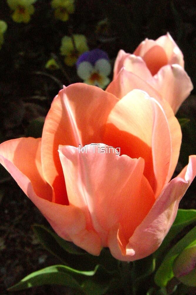 Tulips at Ten by M Tising