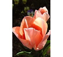 Tulips at Ten Photographic Print