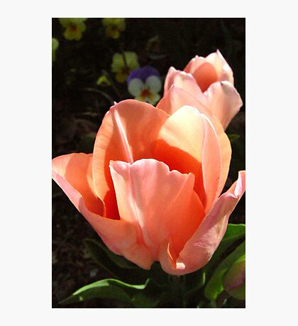 Tulips at Ten Photographic Print