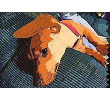 Dog Tired Photographic Print