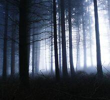 Forest of Dean  by Mariusz Zawadzki