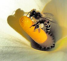 Lily's Bee by Noeline R