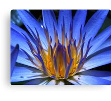 WATER LILY IN BLUE Canvas Print