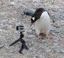Gentoo Penguin in Antarctica & Go Pro - 3 by Janai-Ami