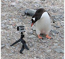 Gentoo Penguin in Antarctica & Go Pro - 3 Photographic Print