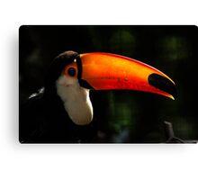 Toucan No. 5 of Iguazu Canvas Print