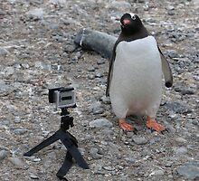 Gentoo Penguin in Antarctica & Go Pro - 4  by Janai-Ami
