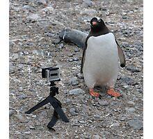 Gentoo Penguin in Antarctica & Go Pro - 4  Photographic Print