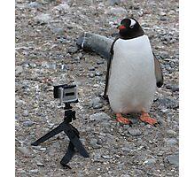Gentoo Penguin in Antarctica & Go Pro - 5 Photographic Print
