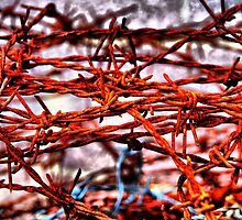 Barbed wire by andreisky