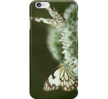 """Two Posing... """"Brown-veined White butterfly"""" (Belenois aurota) Free State, South Africa iPhone Case/Skin"""