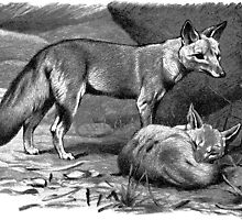 Illustration of two foxes by marmur