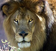 The King by Sue  Cullumber