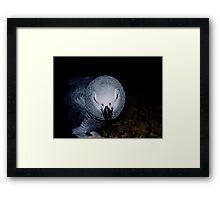 Mean Bird!!! Framed Print