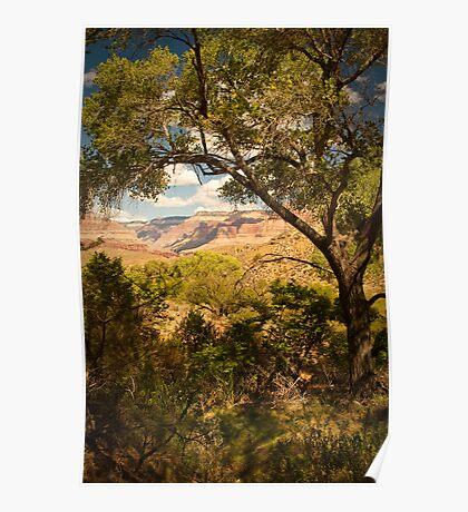 Indian Garden - Grand Canyon Arizonia Poster