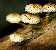 Mushrooms by Stephen Beattie