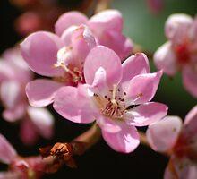 Pink Spring by loiteke