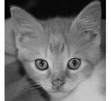 kitten, black & white Photographic Print