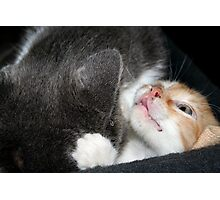 two cats Photographic Print