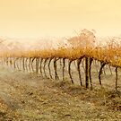 Wet Vineyard by Ben Goode