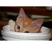 ginger kitten playing peek-a-boo Photographic Print