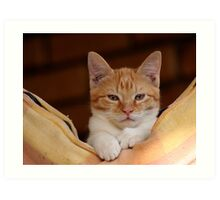 cute ginger cat Art Print