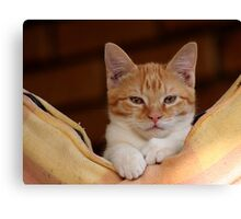 cute ginger cat Canvas Print