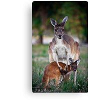 Mother and Joey - Kangaroos of Western Australia Canvas Print