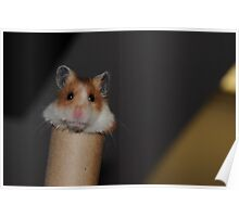 Candy the Hamster Poster