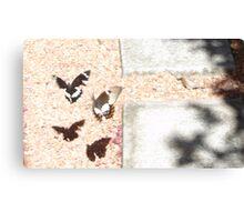 Beaut Butterflies Canvas Print