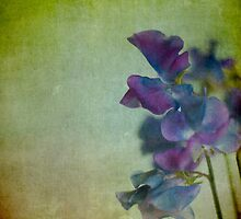Sweet Peas by Jill Ferry