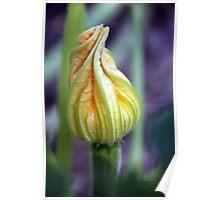 Budding Zucchini Poster