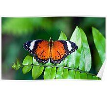 Orange Lacewing Poster