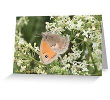 Small Heath Coenonympha pamphilus Greeting Card