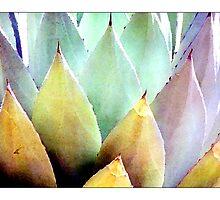 Century Plant #1 - Postcard by Michelle Bush