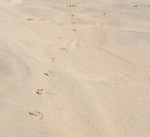 Baby Footprints by MichelleRees