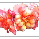 Tuberous Begonia #1 - Postcard by Michelle Bush