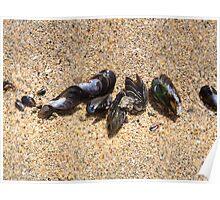 Shells On Grains of Sand Poster