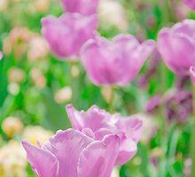 tulips in a garden by yumehana