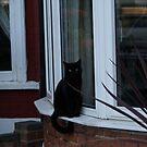 Magic Cat nextdoor by BronReid
