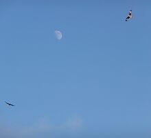 Red kites circling at Nant yr Arian by EDaf