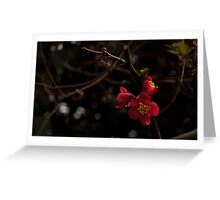 Quince, Red Flowering Greeting Card