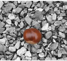 Conker by milesphotos