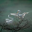 Avery Island Egrets--Nest Building Time  by Bonnie T.  Barry