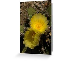 Gossamer Petals - Twin Cactus Blooms Greeting Card