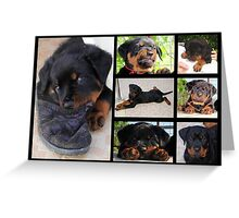 Seven Faces of Mollie Greeting Card