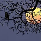 The Owl And The Moon by Qnita